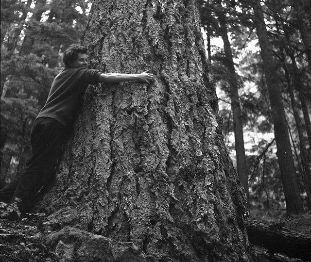 calin arbre